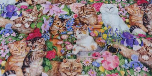 Cats, Kittens in the Flowers